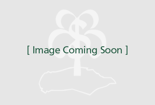 'Elm Kiln Dried Waney Edge Board - 27mm x 560mm x 2800mm - Very light pip with good figure and good crotch'